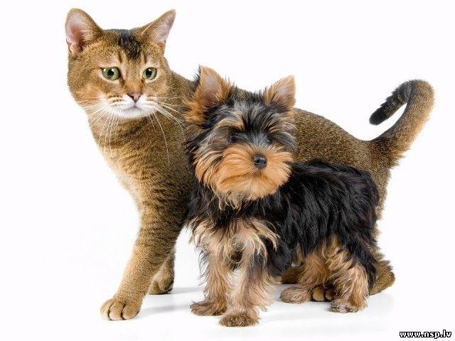 Домашние Животные Кошки и Собаки Друзья Человека Питомцы