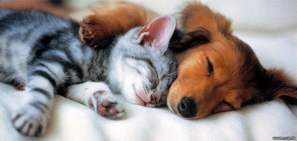 Котенок и Щенок Спят Вместе - Домашние Животные Кошки и Собаки Друзья Человека Питомцы Прикол
