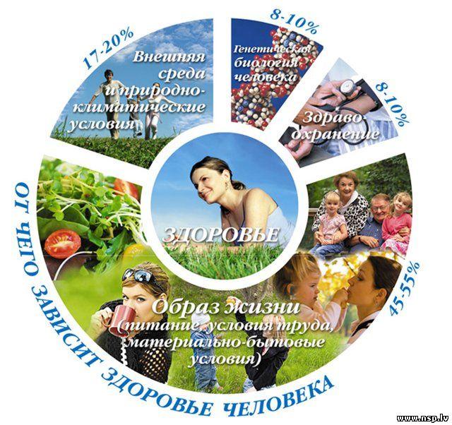 основы здорового образа жизни человека