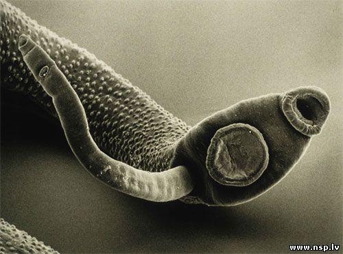 очищение кишечника сухофруктами