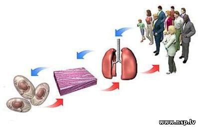 Основные принципы Здоровья Nature's Sunshine Products - NSP Строение Человека Клетка Ткань Орган Система Органов Организм Человек Биологически Активные Добавки к пище - БАД